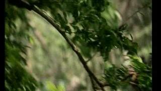XXX – Tarzan X (Rocco Siffredi)